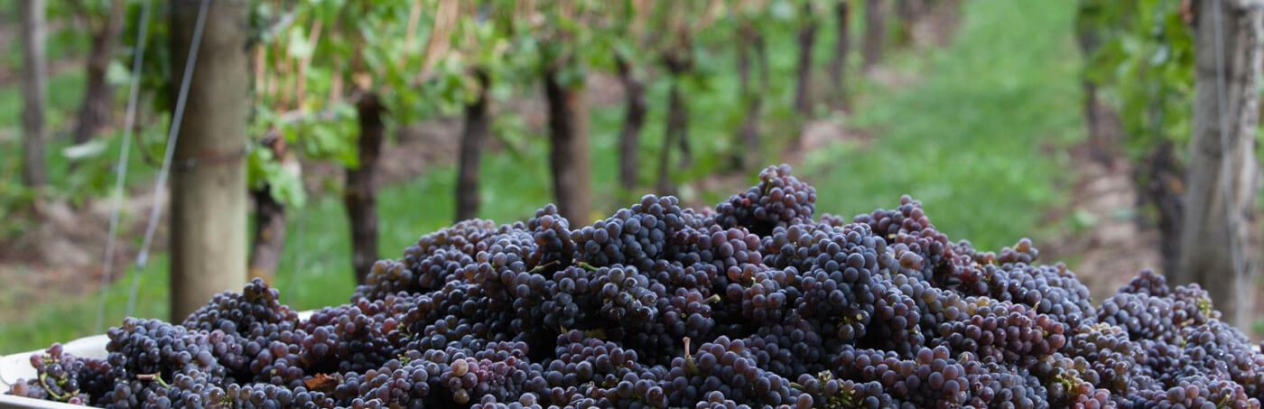 <h3 >Edgefield Winery</h3>